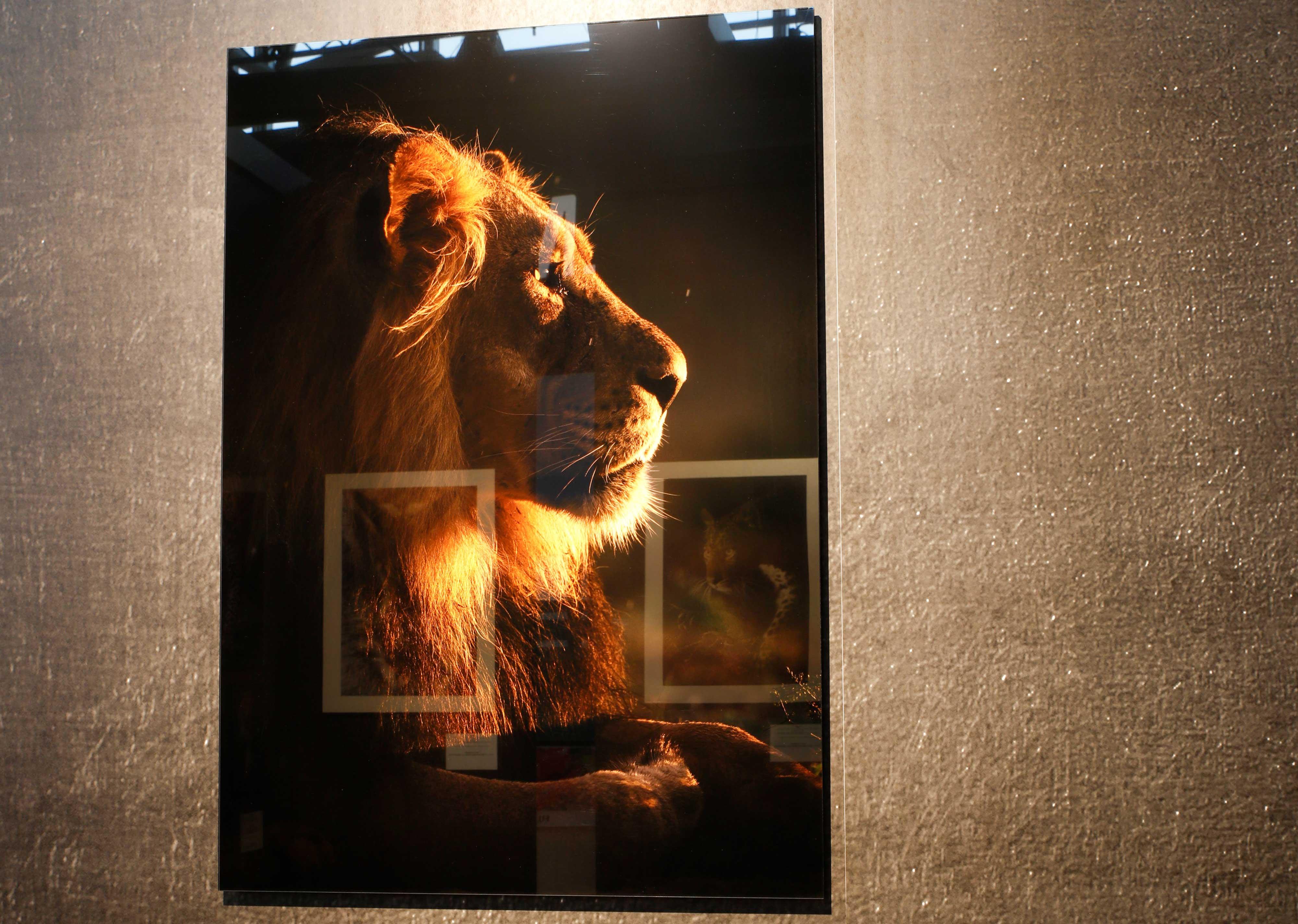 Lamineren foto acrylglas 3